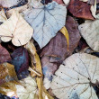 Decaying leaves, closeup shot - Stock Photo