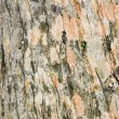 A texture of brown tree bark - Stock Photo