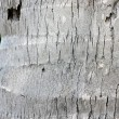 Coconut tree bark, textured - Stock Photo