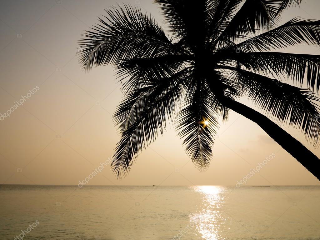 Palm Trees Silhouette Palm Trees Silhouette at