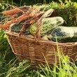 Wattled basket with vegetable marrows,carrots on a green grass — Stock Photo