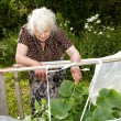 The old woman in a hothouse at bushes of Cucumbers — Foto Stock