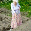 The old woman works in a blossoming garden — Stock Photo