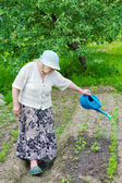The grandmother waters bed from a watering can — Stock Photo