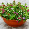 Flowers on the patio — Stock Photo