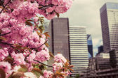 Spring in the business center — Stock Photo