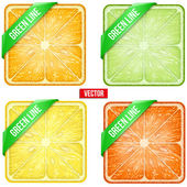Set of Square fruits slices with Green ribbon. Vector Illustration. — Stock Vector