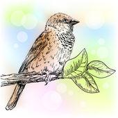 Sparrow — Stock Vector