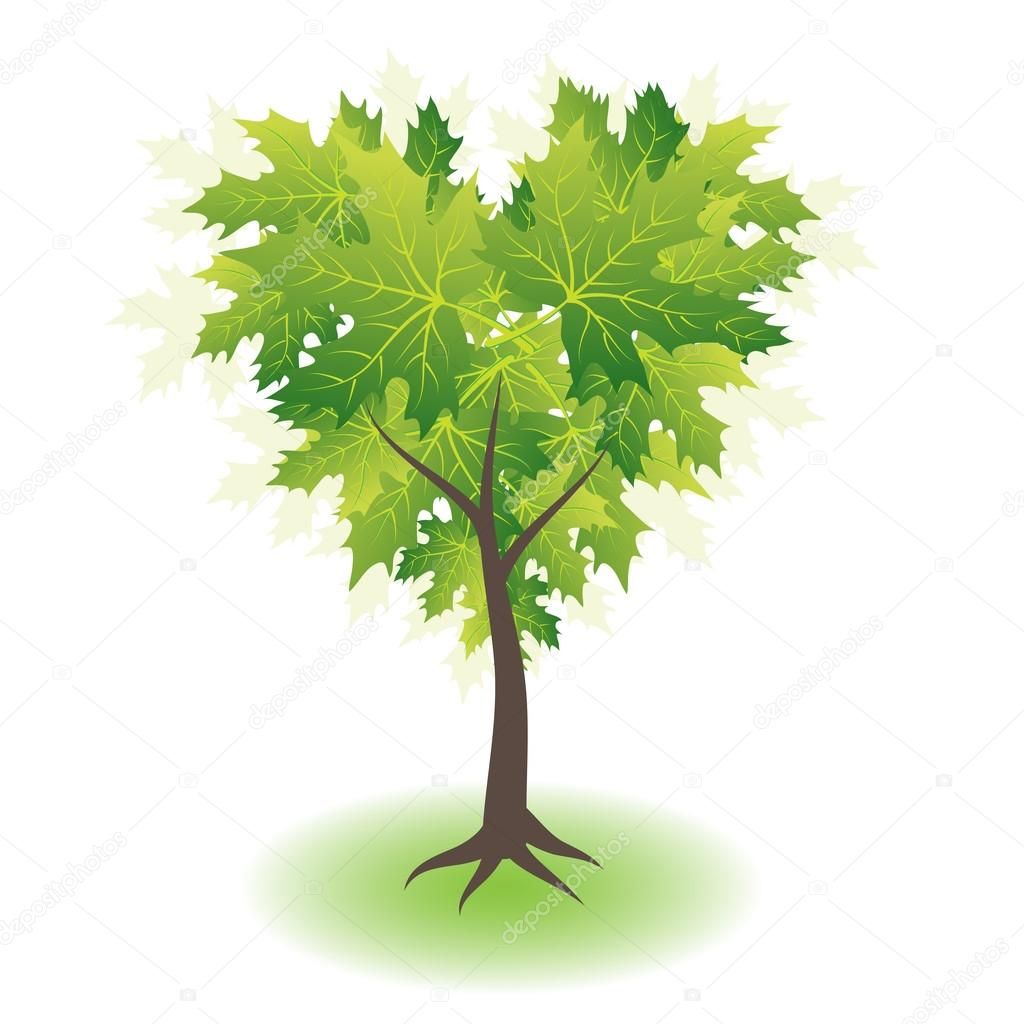 Green maple tree, heart shape — Stock Vector #16052557