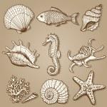 Коллекция моря. Оригинальный ручной обращается иллюстрации — Cтоковый вектор