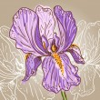 Purple Iris — Stock Vector
