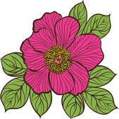 Sfondo floreale con fiori di peonia — Vettoriale Stock