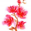 Watercolor pink flower — Stock Photo