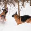 Stock Photo: Two shepherds