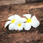 Frangipani (plumeria) flowers — Stock Photo #13335743