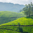 Tea plantations — Stock Photo #13631600