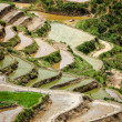 Rice field terraces. Near Sapa, Mui Ne — Stock Photo #13631903