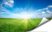 Ssun and green fresh grass field blue sky sticker — Stock Photo