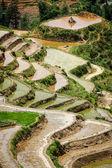 Rice field terraces. Near Sapa, Mui Ne — Stock Photo