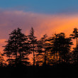 Stock Photo: Silhouettes of trees on sunset
