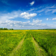 Spring summer - rural road in green field scenery lanscape — Stock Photo #25475737