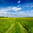 Spring summer - rural road in green field scenery lanscape - Stock Photo