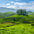 Tea plantations — Stock Photo #25475739