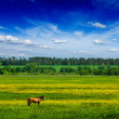 Spring summer green field scenery lanscape with horse - Stock Photo
