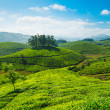 Tea plantations — Stock Photo #25475827