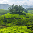 Tea plantations — Stock Photo #25475845