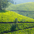 Tea plantations — Stock Photo #25475891