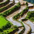 Rice field terraces. Near Sapa, Mui Ne — ストック写真
