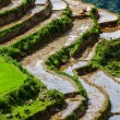 Stock Photo: Rice field terraces. Near Sapa, Mui Ne