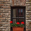 Window with flowers in Europe. Bruges (Brugge), Belgium — Stock Photo