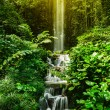Stock Photo: Tropical waterfall