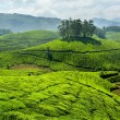 Tea plantations — Stock Photo #25476151
