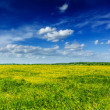 Spring summer background - blooming field meadow - Photo