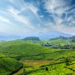 Tea plantations — Stock Photo #25476223