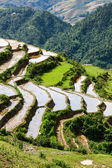 Rice field terraces. Near Sapa, Vietnam — Stock Photo