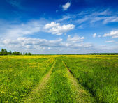 Spring summer - rural road in green field scenery lanscape — Stock Photo