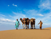 Two cameleers (camel drivers) with camels in dunes of Thar deser — Stock Photo