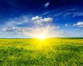 Våren sommaren bakgrund - blommande fält äng — Stockfoto