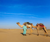 Cameleer (camel driver) camels in Rajasthan, India — Photo