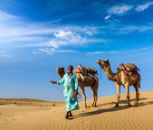 Cameleer (camel driver) with camels in dunes of Thar desert. Raj — Photo