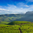 Tea plantations — Stock Photo #34471067