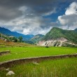 Stock Photo: Rice field terraces, Vietnam