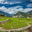 Stok fotoğraf: Rice field terraces, Vietnam