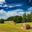 Hay bales on field — Foto Stock