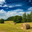 Hay bales on field — Lizenzfreies Foto