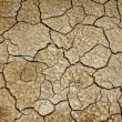 Cracked earth texture — Stock Photo